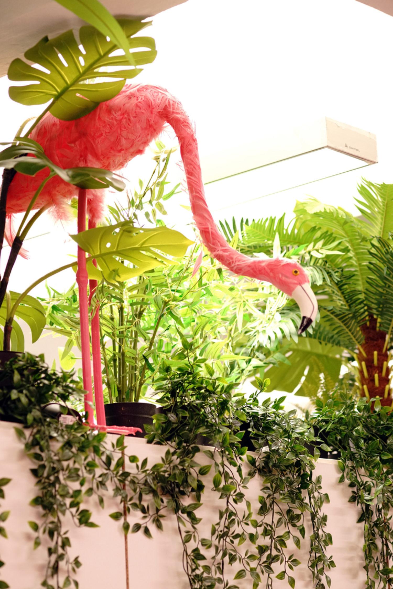 Virgin pink flamingo and plants hallways