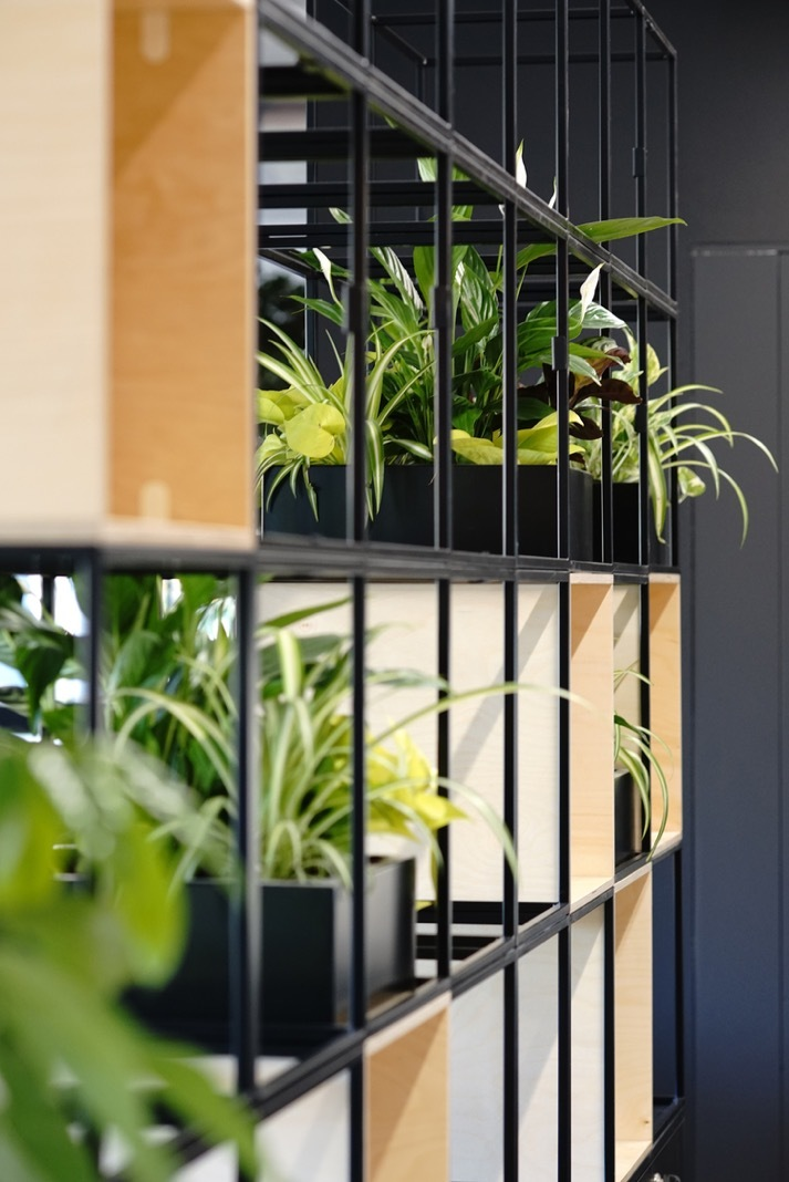 Bottomline office plants