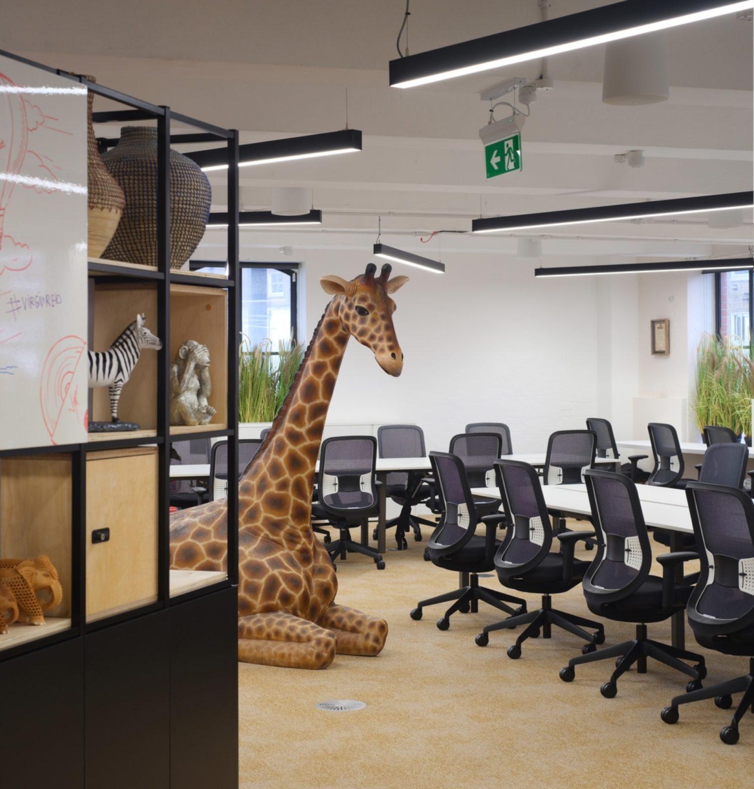 Virgin giraffe in open plan office