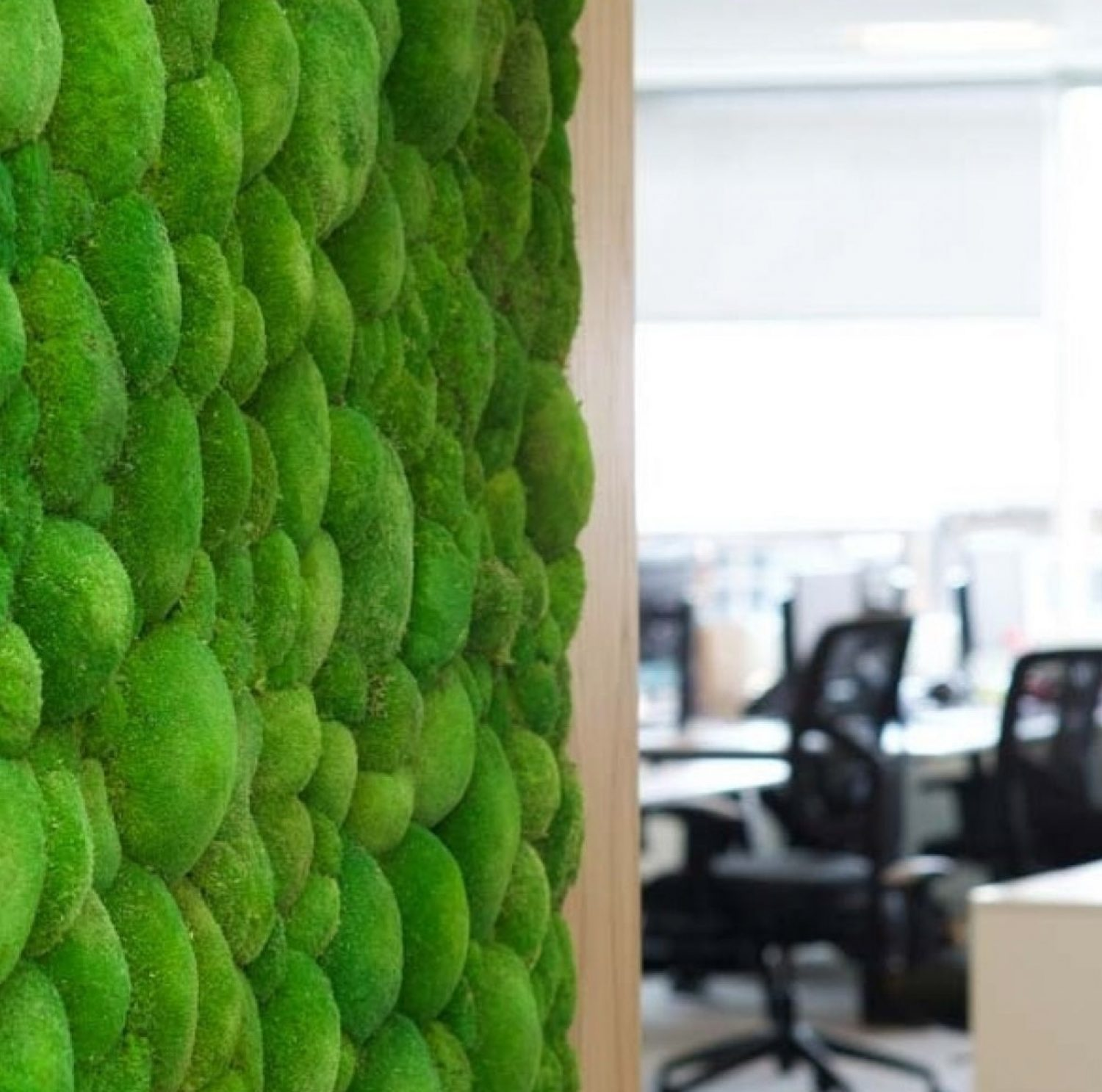 Living wall in relocated office