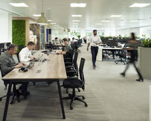 Biophilia in office design